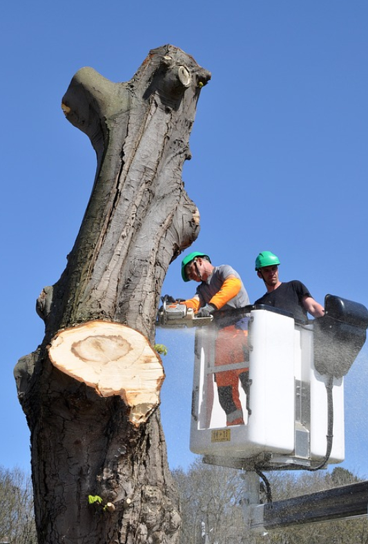 this image shows fair oaks tree service emergency tree service
