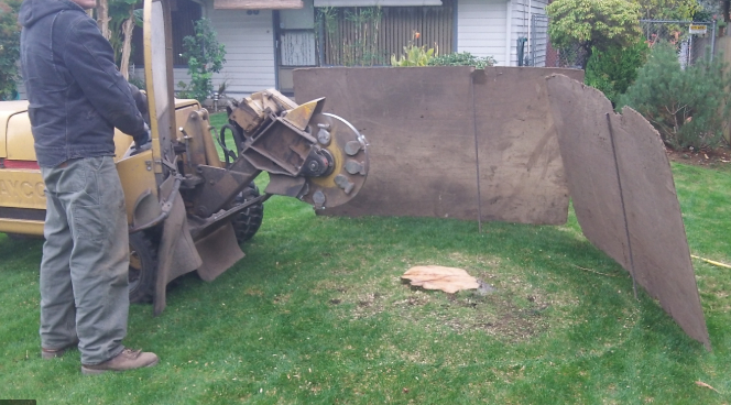 this image shows fair oaks stump removal
