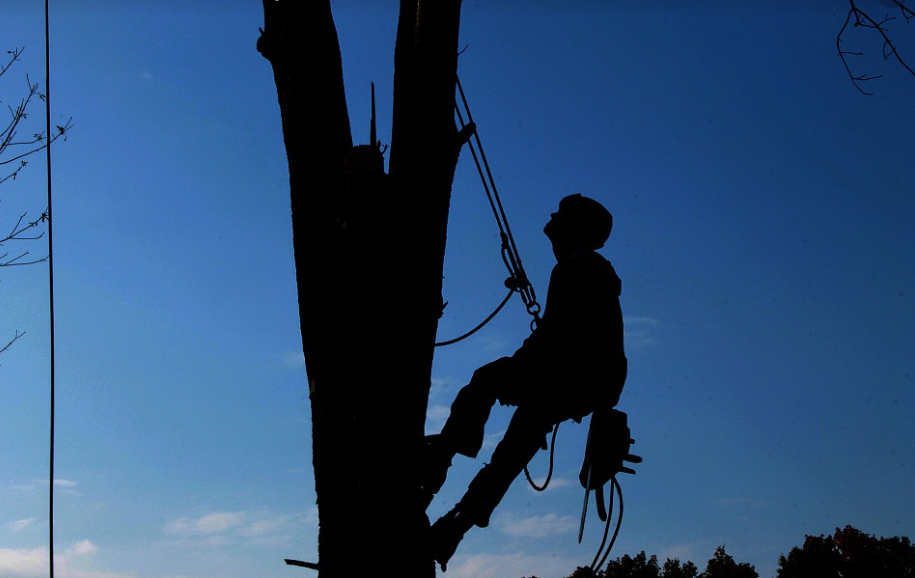 this image shows fair oaks tree cabling