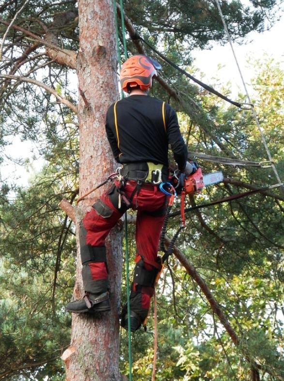 this image shows fair oaks tree care company