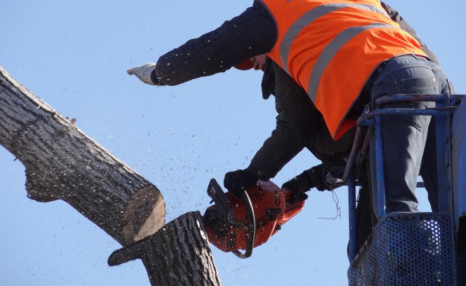 this image shows fair oaks tree cutting