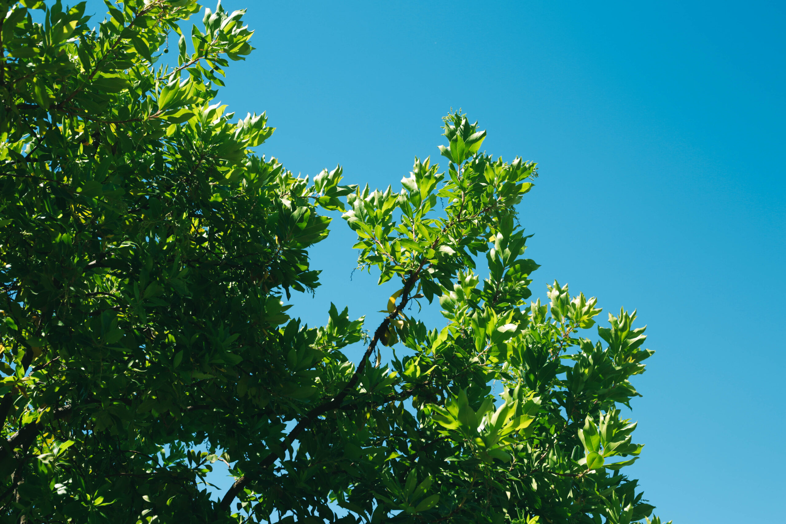 this image shows tree at fair oaks tree service tree planting