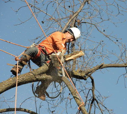 this image shows tree service expert in Fair Oaks, California