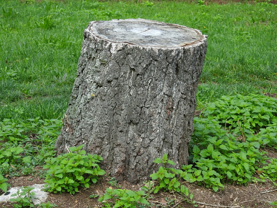 this image shows tree stump removal