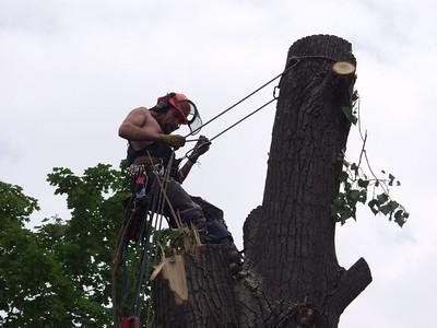 The photo shows arborist in Fair Oaks, CA.