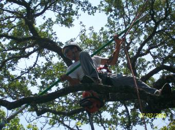 This photo shows commercial tree service in Fair Oaks, CA.