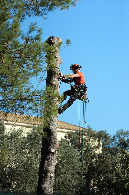 An image of residential tree service in Fair Oaks, CA.