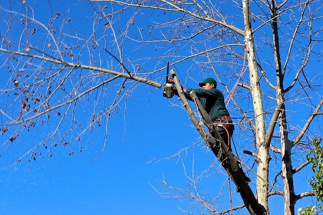 This is an image of tree service in Fair Oaks, CA