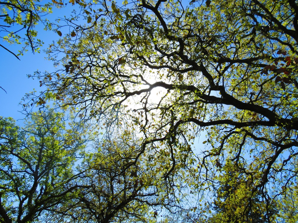 An image of tree services in Fair Oaks, CA.