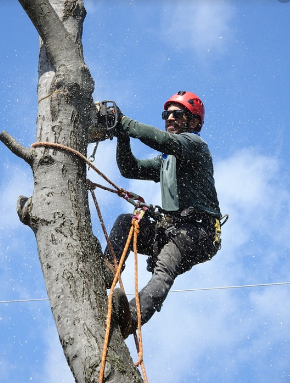 An image of tree removal in Wilhaggin, CA.